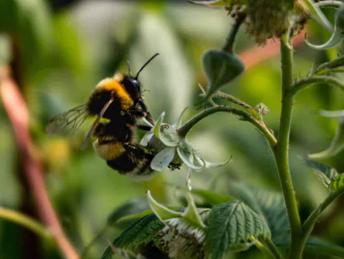Biene auf Pflanze