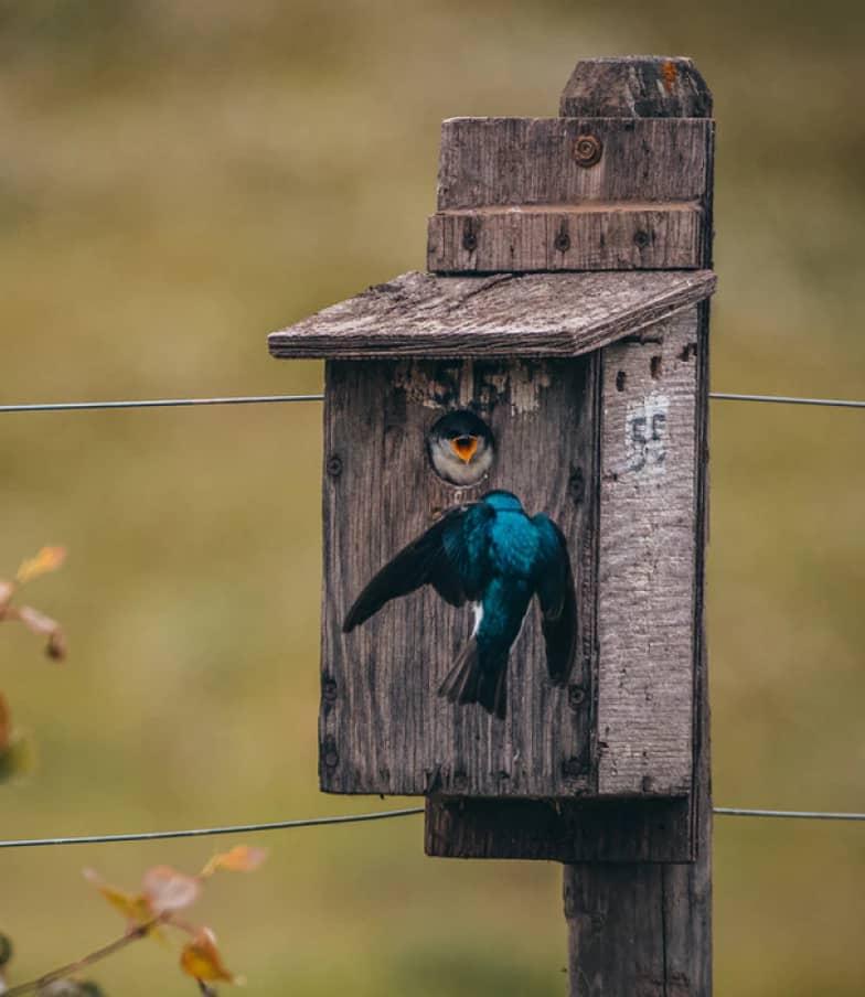 Vogel in Nistkasten