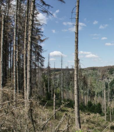 Geschädigte Bäume vor blauem Himmel