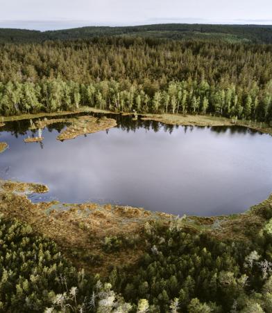 Luftaufnahme von großem Wald- und Moorgebiet